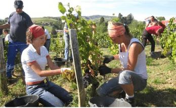 Farming Jobs in New Zealand